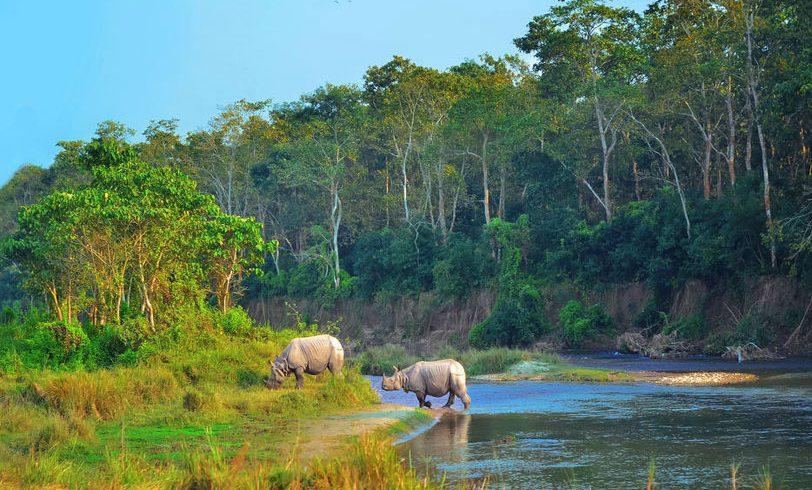jungle-safari-ace-vision-nepal
